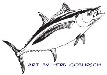 Albacore have a very long pectoral fin.